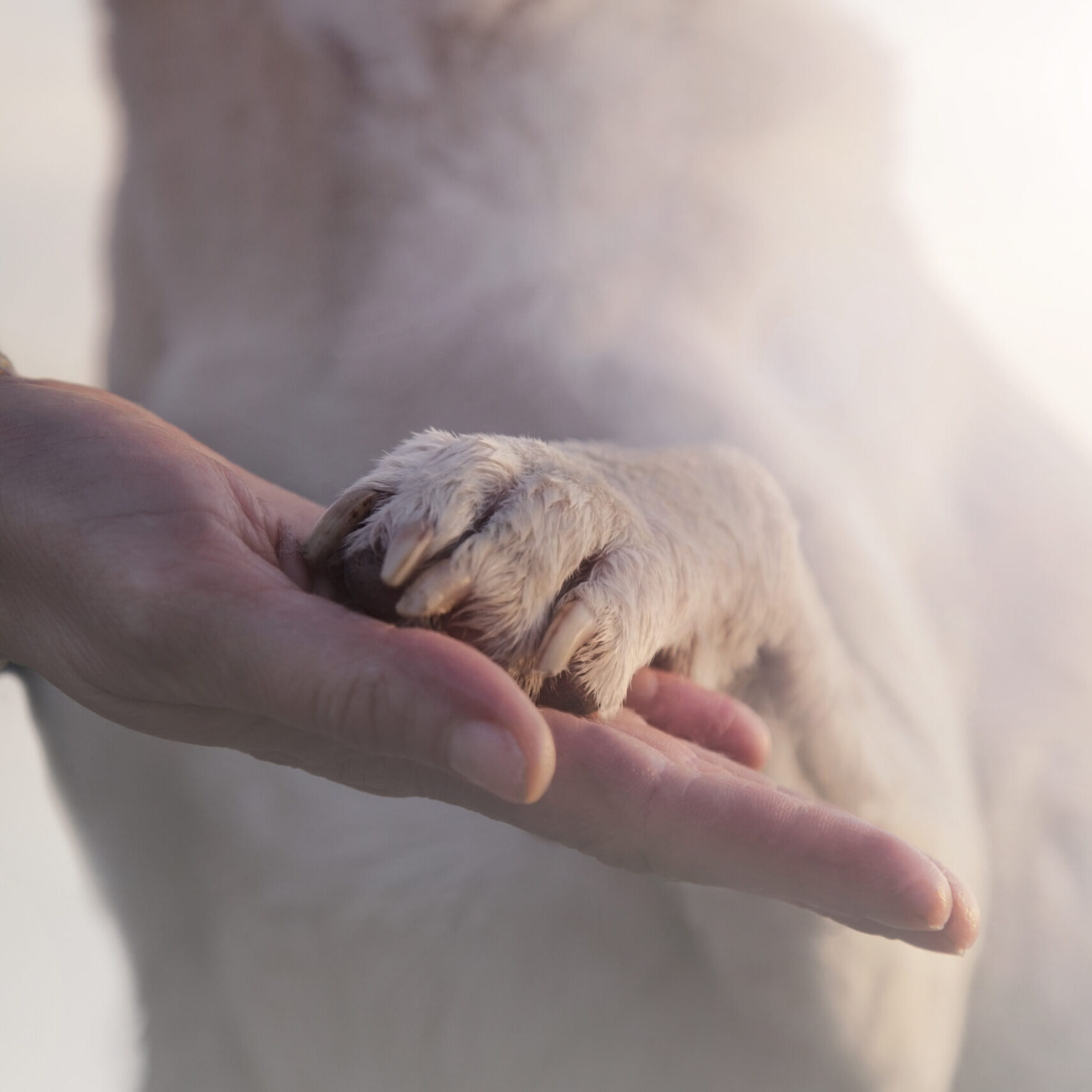contact between dog paw and human hand, gesture of affection